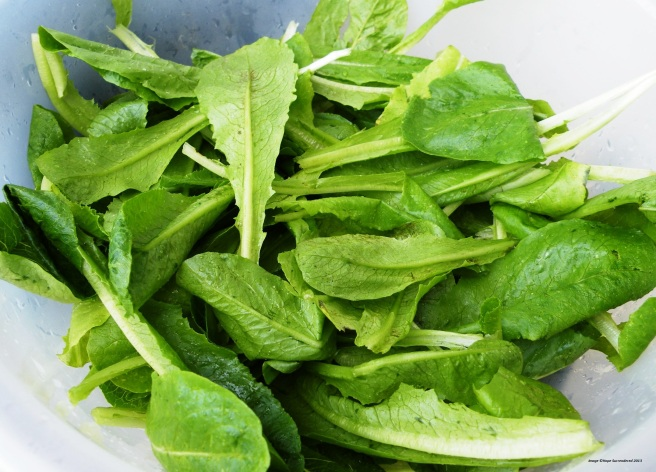 Freshly-picked Greens - Copy