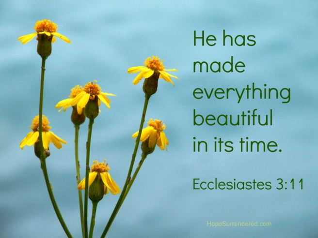 Ecclesiastes 3-11.Wildflowers